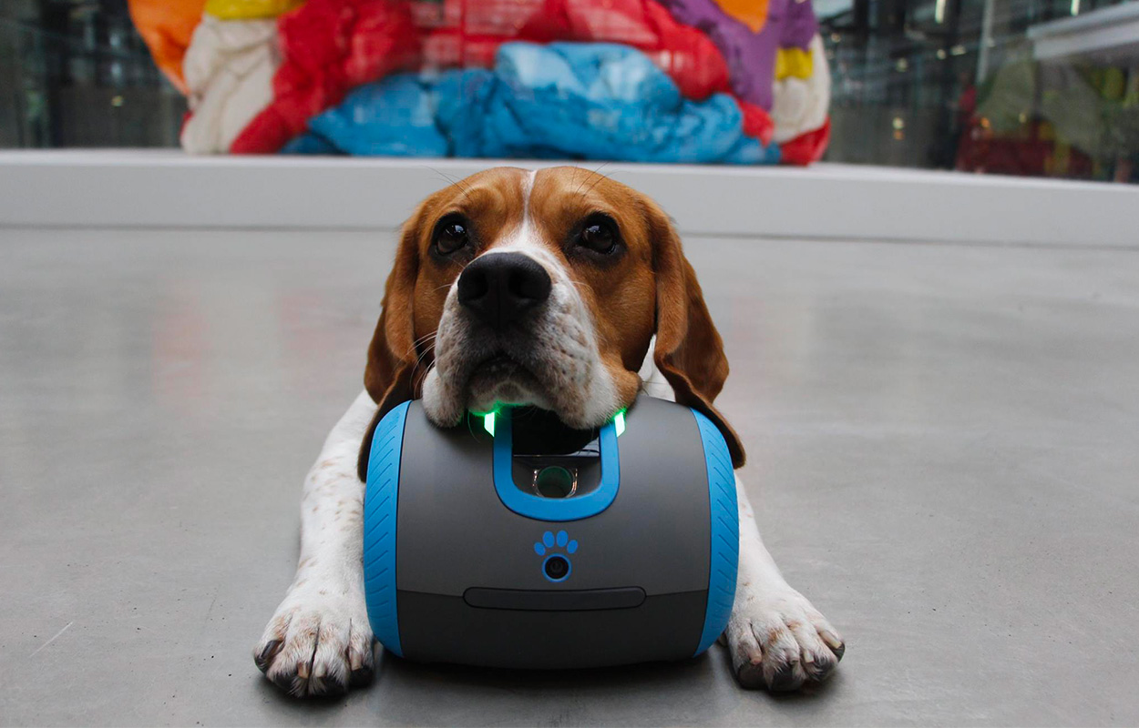 robot pour chien